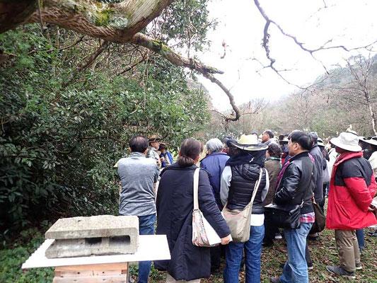 2020年2月山田緑地みつばちプロジェクトの様子-2