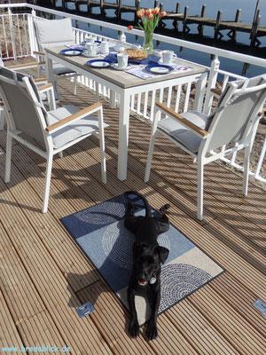 Patterdale Terrier in Urlaub