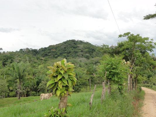 ... estas figuras se encontraron al pie de este Cerro del Manatí...