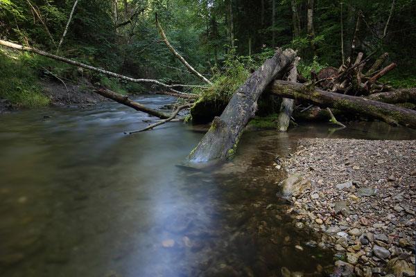 Gauchachschlucht, Schwarzwald