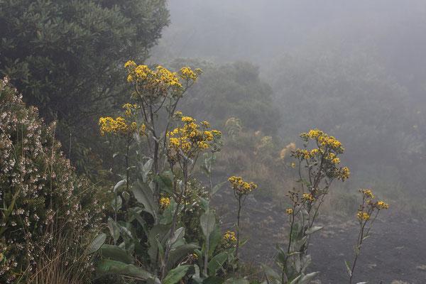 Am Vulkan Irazu