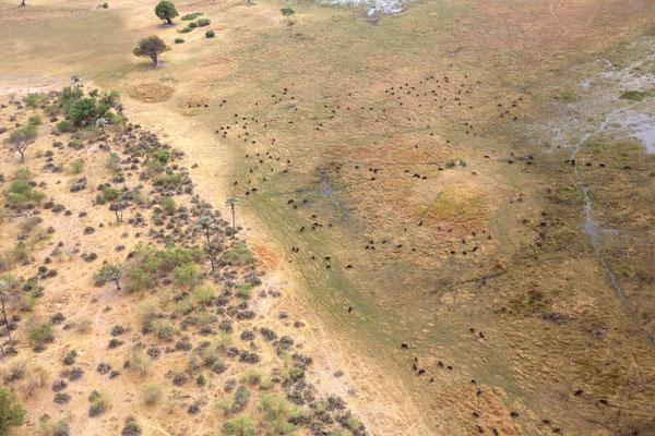 Rundflug üder das Okawango Delta