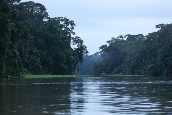 Im Tortuguero National Park
