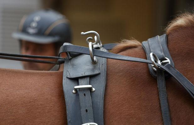 Ausflug zu einem Pferdegestüt