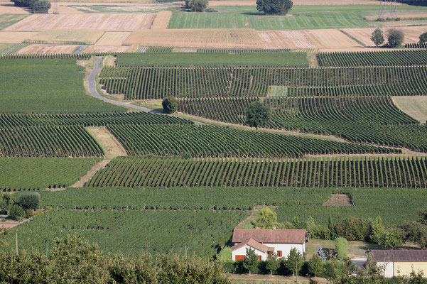Tour in die Weinberge