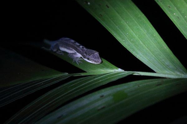Nachtwanderung im Dschungel