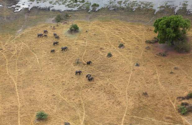 Rundflug über das Okawango Delta