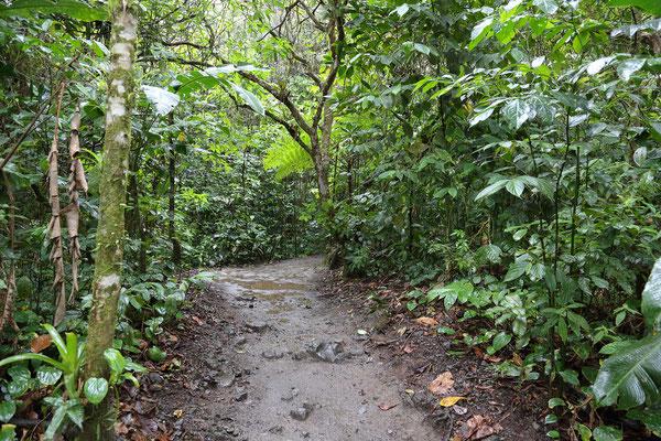 Wanderung um den Vulkan Arenal