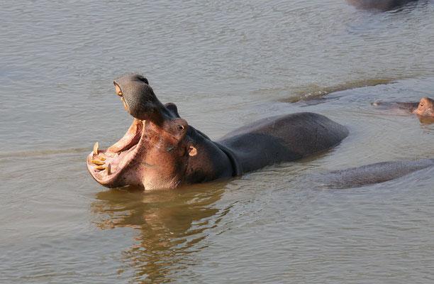 Am Luangwa River
