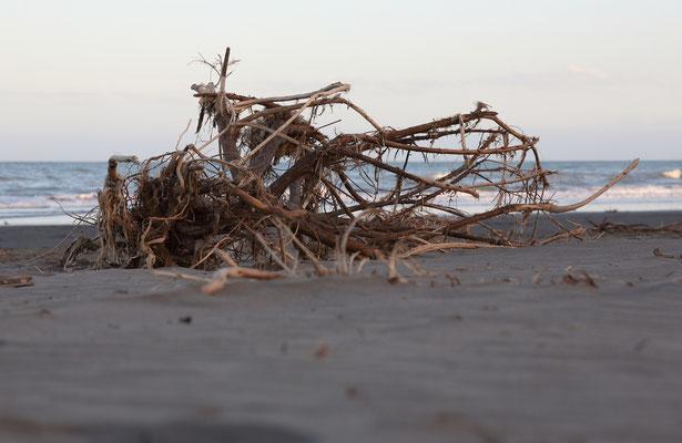 Strand von Chrischurch