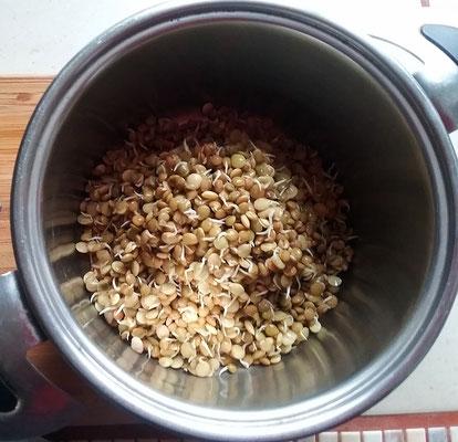 Linsen in den Topf geben und 20 min kochen, ohne Gewürze und Salz