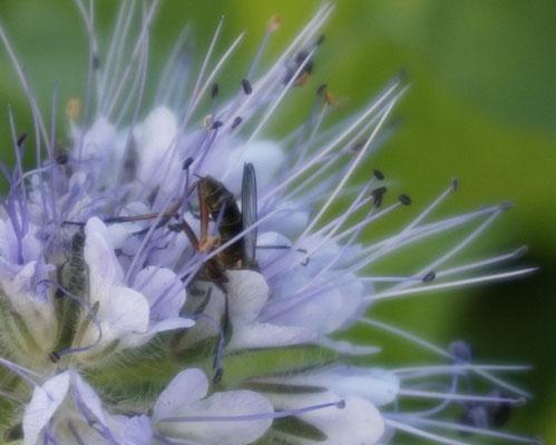 Kopfüber in die Blüte