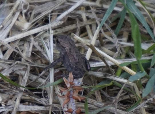 Kleine Frösche suchen Schutz vor Fressfeinden