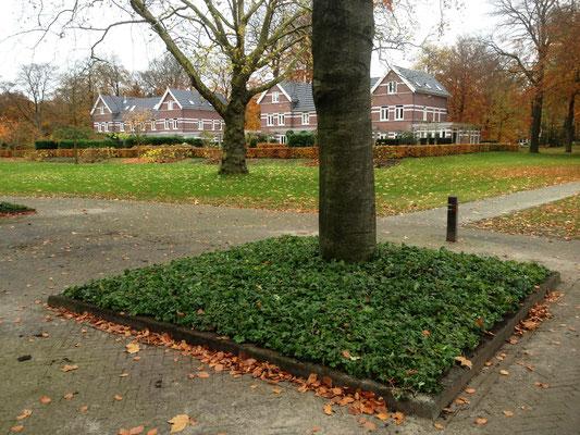 Baumscheibe mit Bodendeckermatten von GreenFairway e.K.