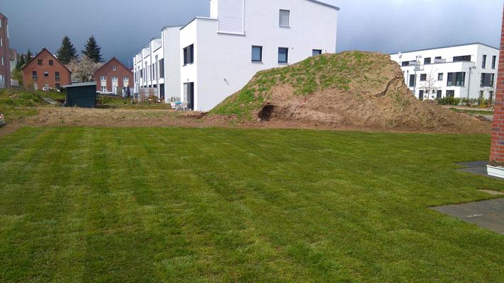 Rollrasen verlegen in Hannover Ahlem, GreenFairway e.K.