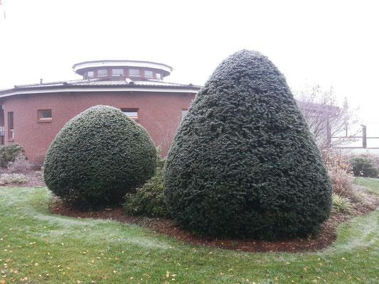 Gartenpflege: Formschnitt, Heckenschnitt, GreenFairway e.K.