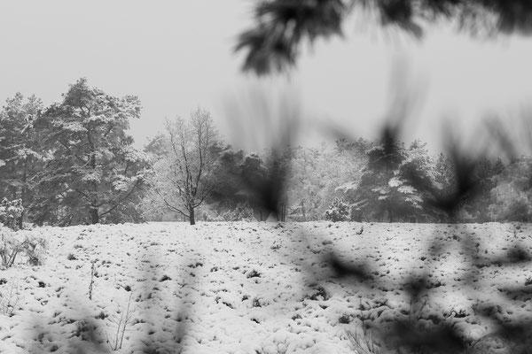 "Michael Herde: ""Winterheide"""