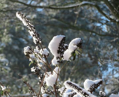 Helmut Gose: Schnee