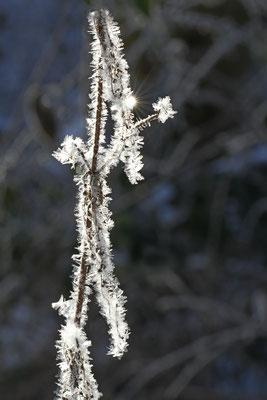 Lothar von Alm: Früh morgens bei -15°C