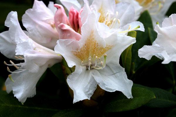 """""""Blüten"""" Lothar von Alm"""