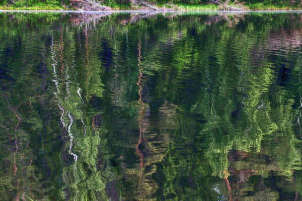 Wolgang Steinborn: Waldspiegelung