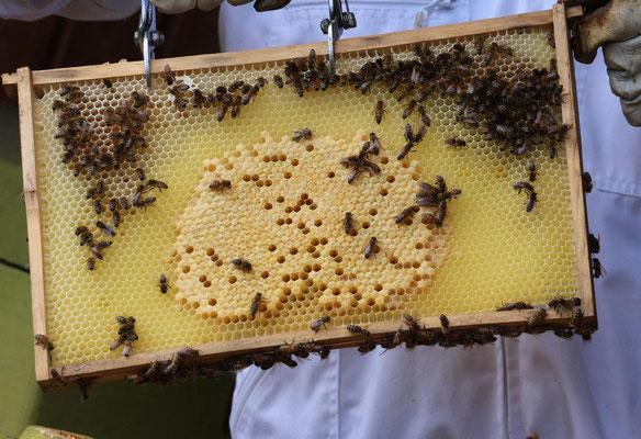"""Ulrike Gose """"Bienenkontrolle"""""""