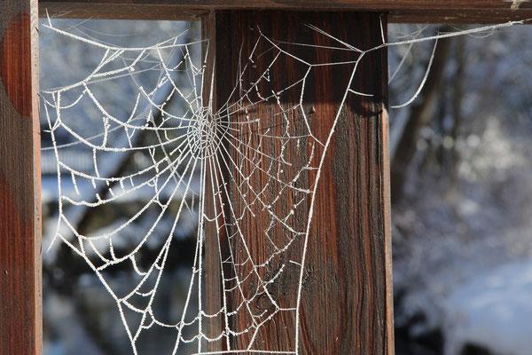 Lothar von Alm: Frostige Verbindung