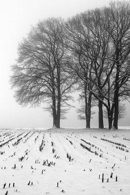 Wolfgang Steinborn: Winter
