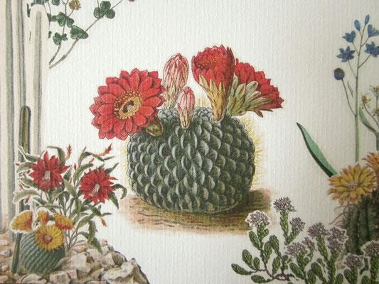 S&Z - ik heb een mix van verschillende vintage botanische prenten gebruikt / I used a mix of different vintage botanical illustrations