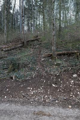 Steil führt die Spur den Wald hoch, links an der kleinen Baberten vorbei