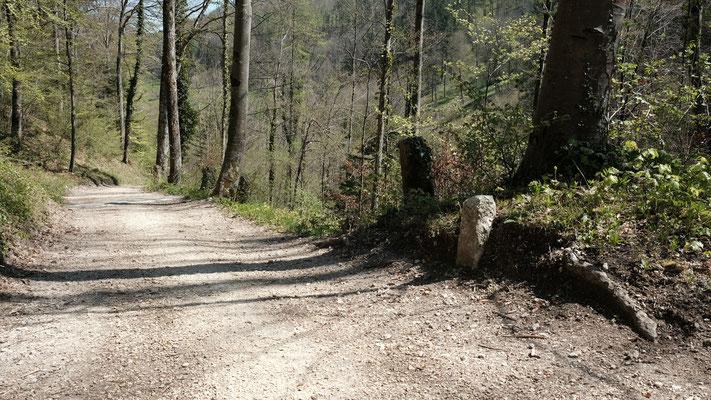 Kurze Verschnaufpause auf dem Waldweg bevor es steil weitergeht.