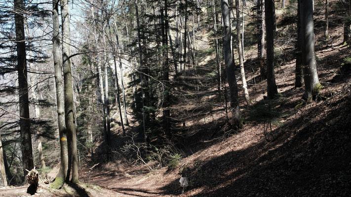 Zwischen der Bürten und dem Ängiberg führt die Grenze über Felsenpartien. Die lasse ich aus und nehme den komfortablen Wanderweg.