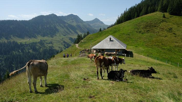 Alp Ober Loegg