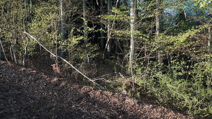 """Ein blauer Bändel markiert den """"Eingang"""" in den Wald"""