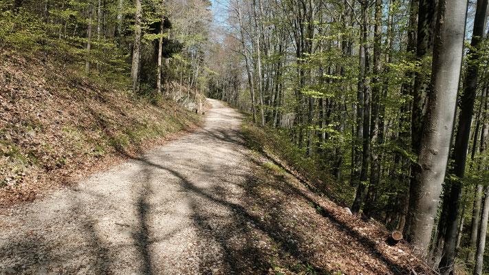Weg unter dem Balsberg.   Die Grenze verläuft rechts unter dem Weg im Wald. Den Krampf im abhaltigen Gelände und durch Brombeergestrüpp lasse ich aus.