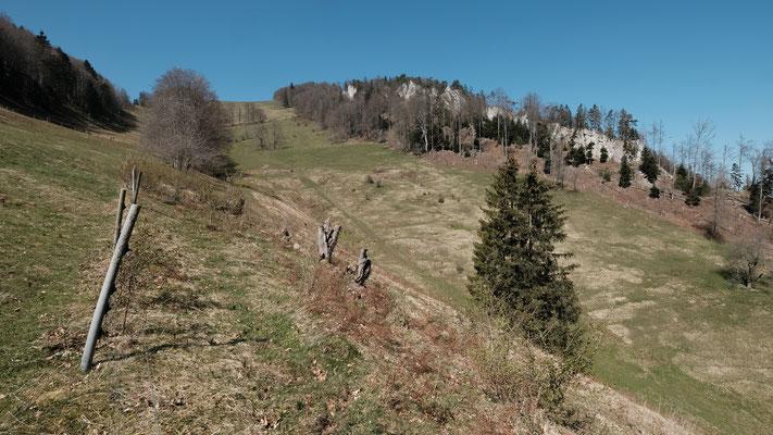 Nun geht es den Bäumen entlang hoch Richtung Vogelberg