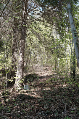 Sehr anstregend war, dass die Wanderstöcke immer wieder im Unterholz hängen geblieben sind und es einem immer aus dem Rythmus gebracht hat, sie herauszuziehen.