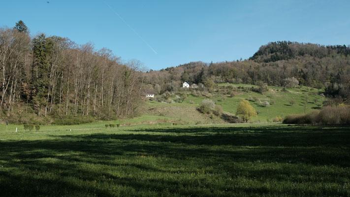 Die Grenze verläuft nun - vom tiefsten Punkt von Reigi - über die Strasse zur Ecke des Waldes und links von der unteren Bütschen vorbei hoch in den Wald und ob der oberen Bütschen weiter nach rechts.