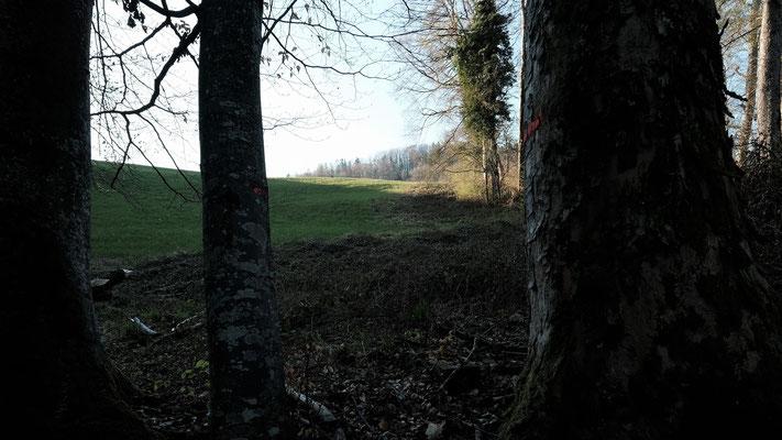 Aus dem Wald kommend geht es weiter hoch zur Strasse nach Titterten
