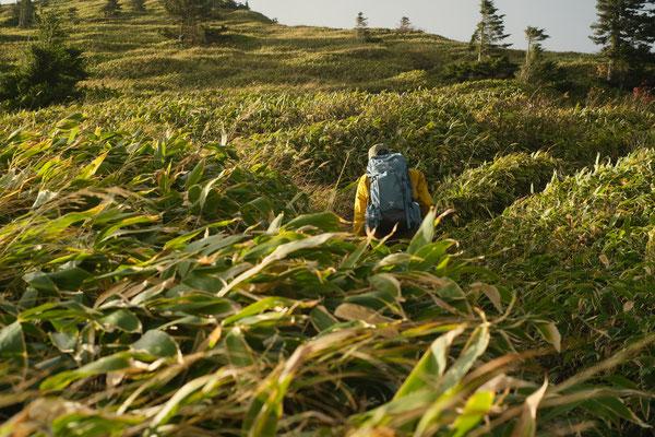 笹の海を歩きます。