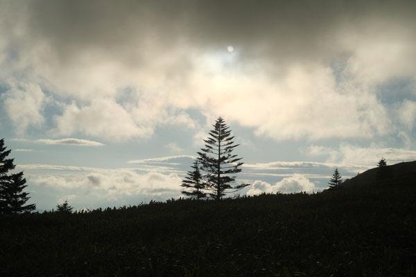 一本木立の影絵風景が綺麗です。