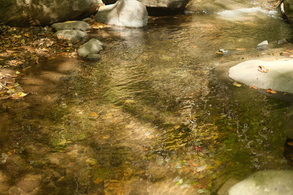 なんという綺麗な水の流れ。