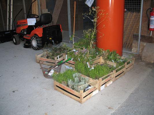 Die Kräuter stehen bereit zum Pflanzen.