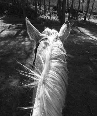 natürliche tierheilung ohne nebenwirkungen pferd