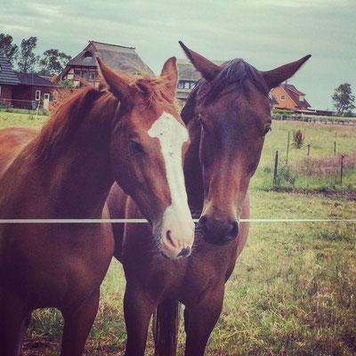 sanfte, natürliche Behandlungen, Heilmethoden für Pferde