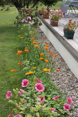 au pied de la terrasse tapis de fleurs