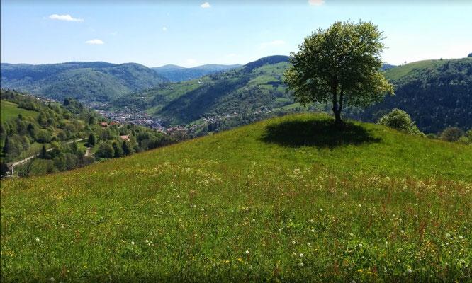 Vue de la ferme des alisiers sur La commune de La Bresse
