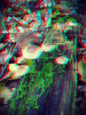 Mushrooms in the forest 3-D