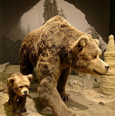Durch eine Altbausanierung haben wir das Deutsche Höhlenmuseum Dechenhöhle geplant