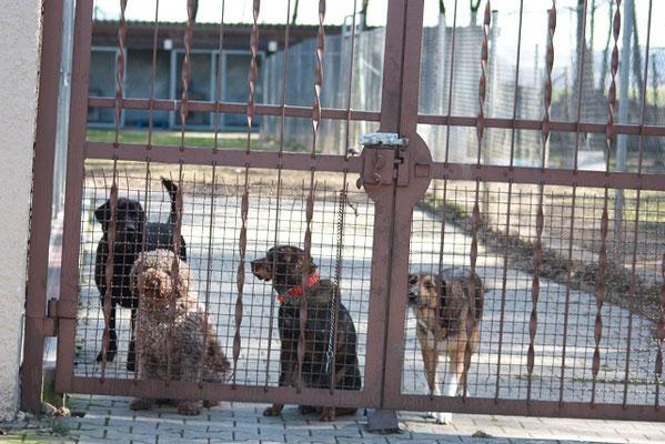 Tierheim Cham Hunde